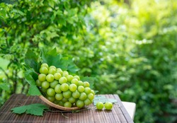 Green grape in Bamboo basket on wooden table in garden, Shine Muscat Grape with leaves in blur background,