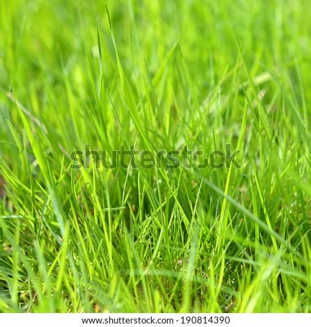 Green grass #190814390