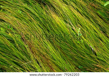Green grass - abstract natural background