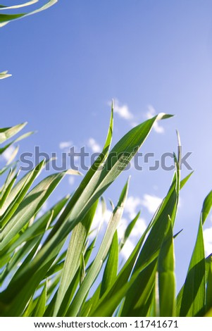 Green grass against blue sky with clouds.With copy space.