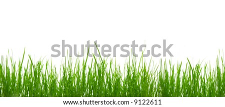 Green grass against white background