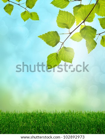 Green grass and birch leaves spring fantasy soft light background - stock photo