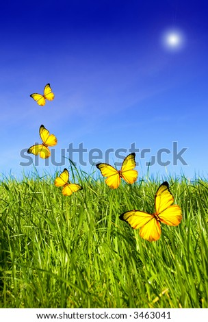 green grass and blue clear sky with sunflare and yellow butterflies flying all around