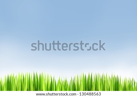 Green grass and  blue sky background  in a nice  day - stock photo