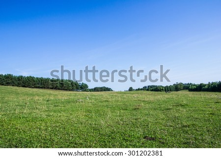 Green grass and blue sky landscape. #301202381