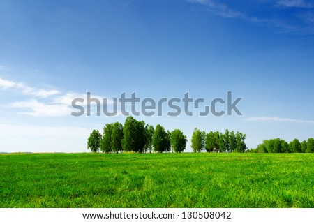 Green grass and blue sky. Summer landscape.