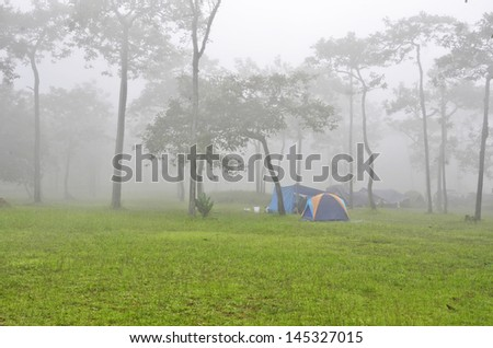 Green grass and camping tents in the fog