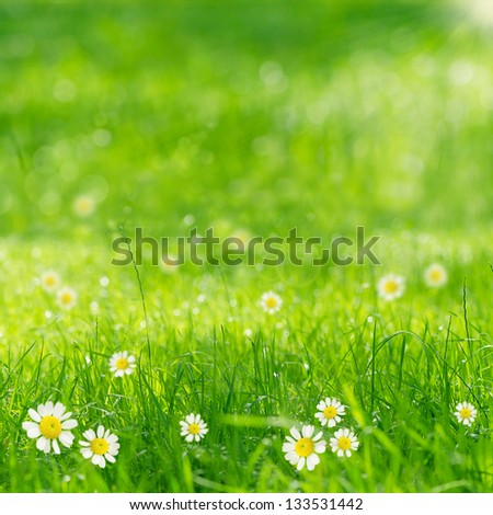 green grass and daisies in the sun
