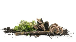 Green grass and fungi with fertile dirt soil and twig isolated on white background