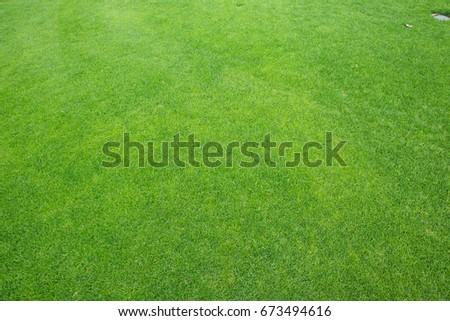 green grass and golf course - Shutterstock ID 673494616
