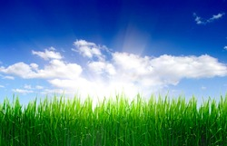 green grass and perfect sky