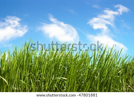 Green  grass and sky blue with white cloud