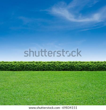 Green grass and summer blue sky