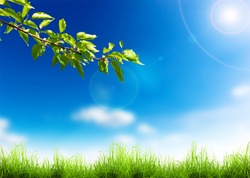 Green grass and tree branch over a blue sky. Beauty natural background