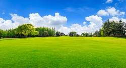 Green grass and trees in spring season.