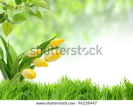 Green grass and tulips in the nature