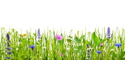 Green grass and wild flowers isolated on white background