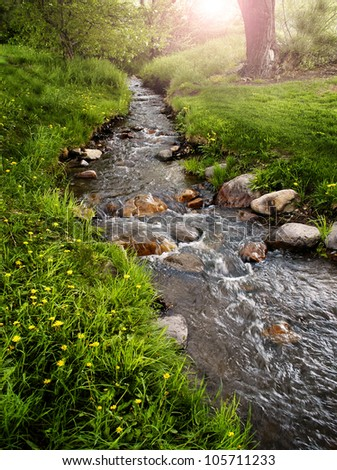 Green grass and yellow flowers in meadow with creek