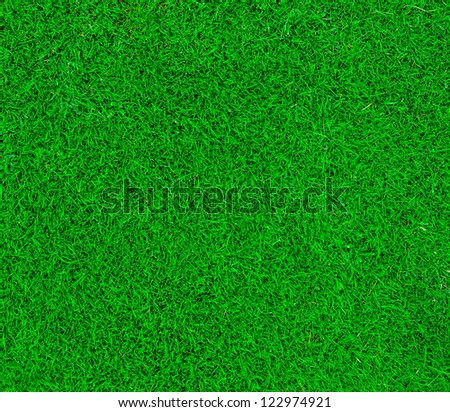 Green grass bacdrop