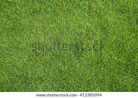 Green grass background. - Shutterstock ID 413385094