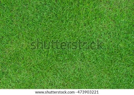 green grass background  - Shutterstock ID 473903221