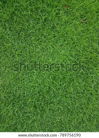Green grass background and texture - Shutterstock ID 789756190