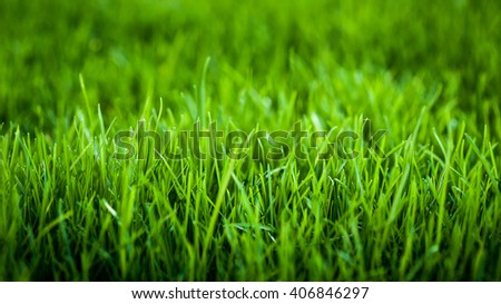 Green grass background image  #406846297
