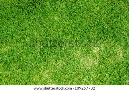 Green grass background texture - Shutterstock ID 189257732