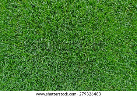 Green grass background texture. - Shutterstock ID 279326483