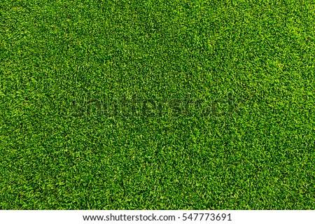 Green grass background texture. Golf or football field