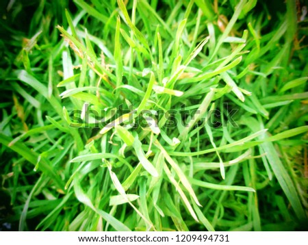 Green grass background texture .top view. #1209494731