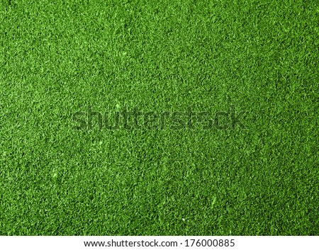 Green Grass Background. Top View