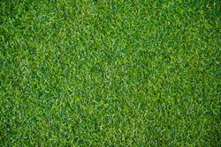 Green grass background vignette or the naturally walls texture Ideal for use in the design fairly.