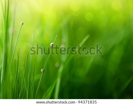 green grass background with color bokeh - stock photo