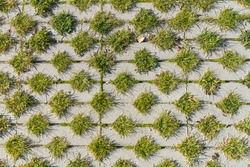 Green grass between the sidewalk square tiles. Grass and cement pavement. Eco parking texture background.