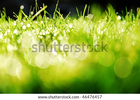 Green grass bokeh
