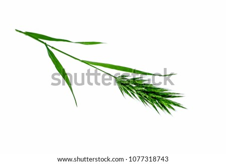 Stock Photo Green grass brushes spike weed on a white background