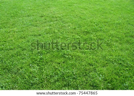 Green grass. Can be used as background