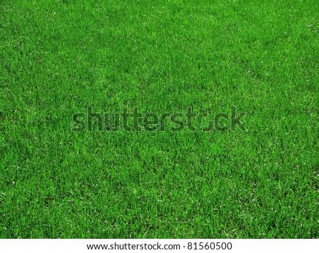 green grass, can be used as background