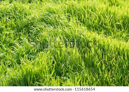Green grass can be used for background