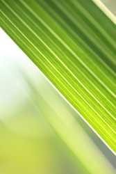 Green grass close-up abstract background. Shallow DOF.
