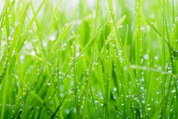Green grass covered with water drops background
