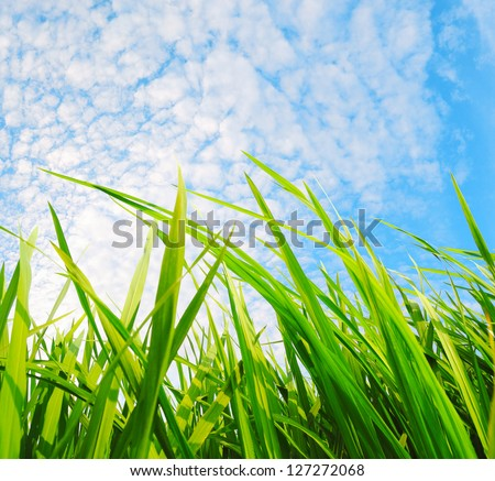 green grass,development environmental protection concept