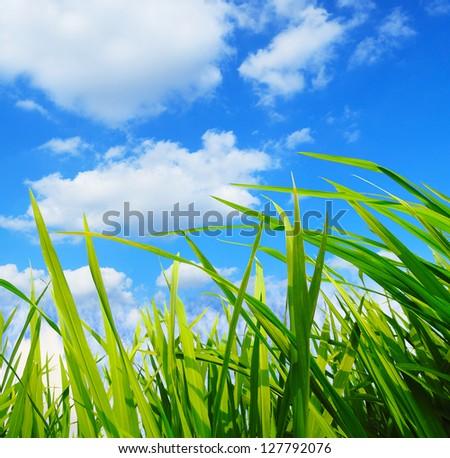 green grass,development environmental protection concept
