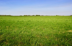 Green grass field and bright blue sky. Background.