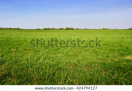 Green grass field and bright blue sky. Background. #424794127