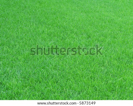Green grass field as a natural background