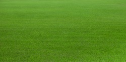 Green grass field, green lawn, Artificial grass. Green grass for golf course, soccer, football, sport. Green turf grass texture and background for design with copy space for text or image.