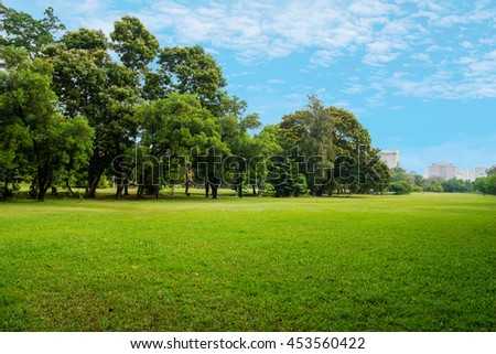 green grass field in big city park #453560422