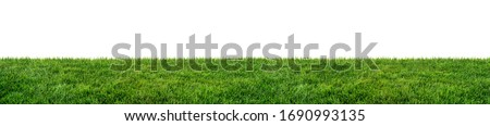 Photo of  green grass field isolated on white background